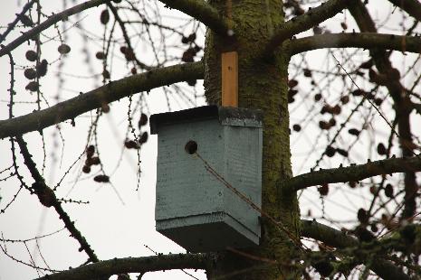 Handmade Bird Boxes